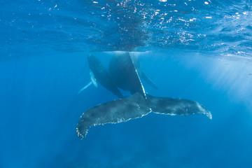 Humpback Whales 2