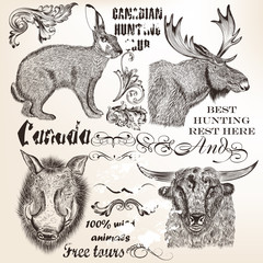 Decorative vector elements and animals in vintage style