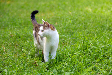 Beautiful cat on green grass in park