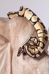 Python 2612