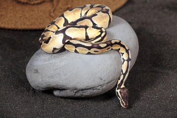 Python 2697