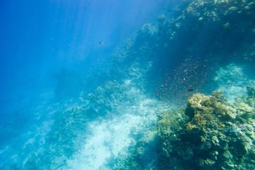 Underwater coral reef.