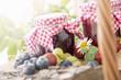 Picknickkorb mit Beeren und Marmeladen - 67694215