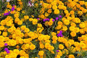 Bunte Blumenpracht in Österreich