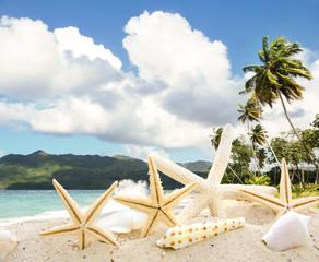 Muscheln an Karibischem Traumstrand :)