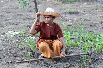 Asian old farmers in the vegetable garden