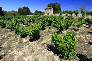 Vignoble et terroir de Collioure et Banyuls, Argeles sur Mer