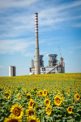 Sunflower and power station