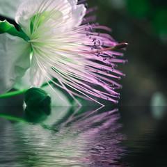 Reflet floral