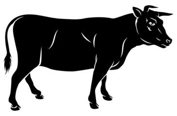 Cow or bull beef illustration