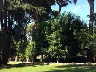 Prato e alberi