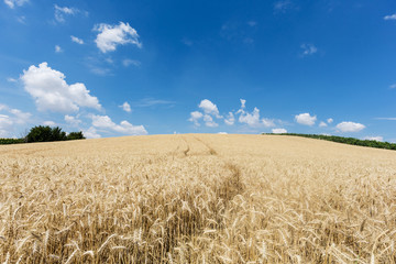 Landwirtschaft Getreide