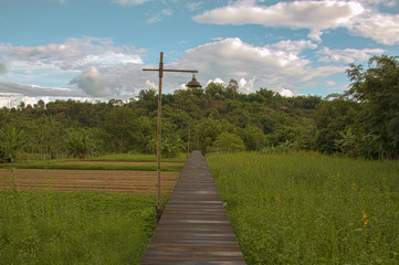 Wood path along rice field and through the mountain