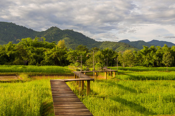 Wood path over rice field and through mountain