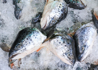 Close up of fresh salmon fish on open market