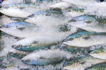 Fresh mackerel in the market