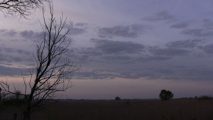 Gray clouds and tree. Time lapse  PAL