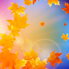 Beautiful autumn Leaves.
