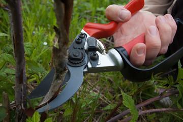 garden pruner in hand