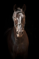 Portrait of black horse on black background