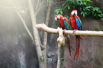 Beautiful Macaw On The Branch