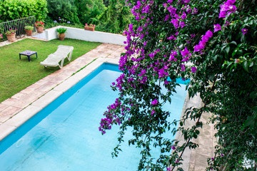 pool view with purple flowers