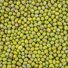 texture of mung bean grain