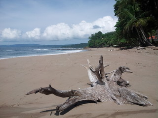 Playa Quizales.Costa Rica