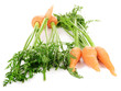 Fresh carrot with leaves isolated on white