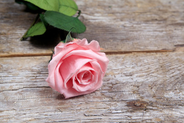 pink roses on a wooden table