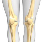 Human knee artwork