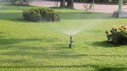 sprinkler on the green garden