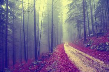 Vintage forest road