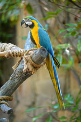 Macaw Perched on Tree