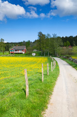 Swedish farm road in May month