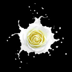 White rose in splashes isolated on black
