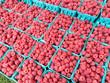 Raspberries at Farmers Market