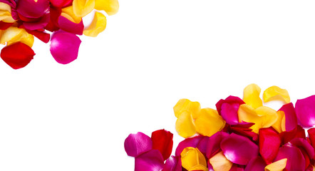 Rose petals background with a copy space