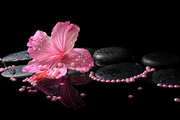 Beautiful spa still life of pink hibiscus, drops and pearl beads
