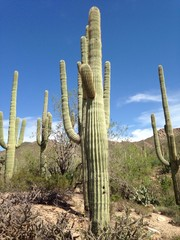 cactus del deserto