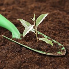 Kleine Pflanze neues Leben und Stärke