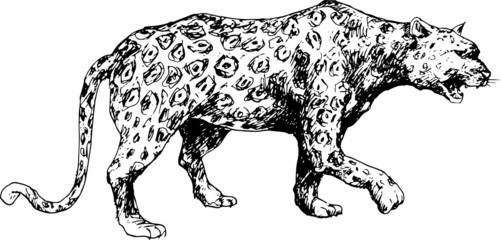 hand drawn cheetah