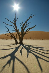 Dead Vlei Shadows