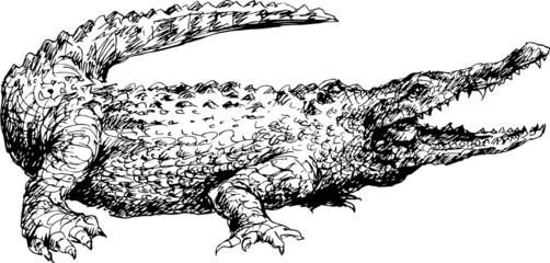 hand drawn crocodile