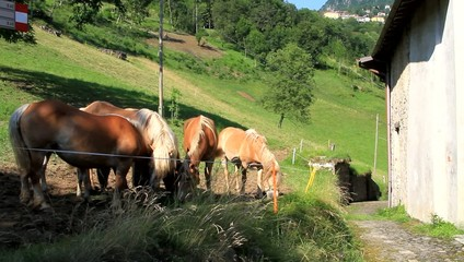 horses grazing along the mountain trail