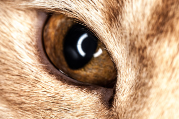 one cat eye macro closeup