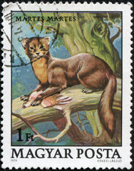 stamp printed in Hungary shows European Pine Marten