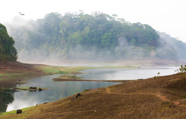 India Kumily, Kerala, India - National park Periyar Wildlife San