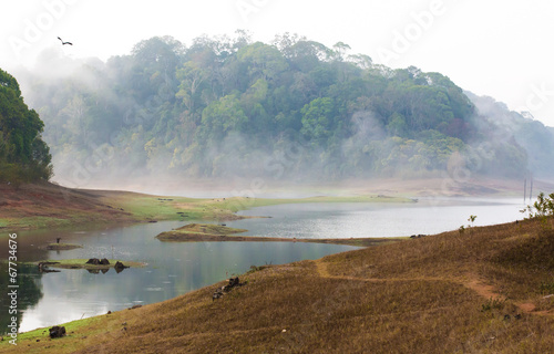 India Kumily, Kerala, India - National park Periyar Wildlife San