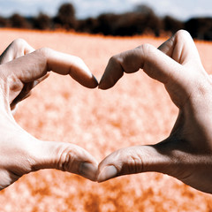Love shape hands - heart on yellow field and blue sky